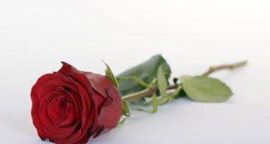 Wer wird die neue Bachelorette? (annca/pixabay)